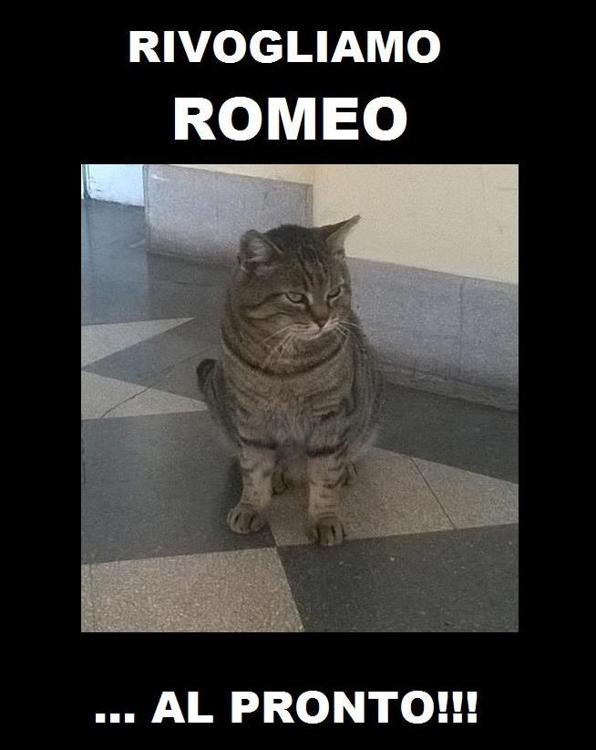 Sanremo,  Rivogliamo Romeo in corsia : le foto
