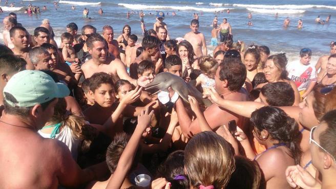 Baby delfino morto sulla spiaggia, i turisti si difendono:  Non lo abbiamo ucciso noi