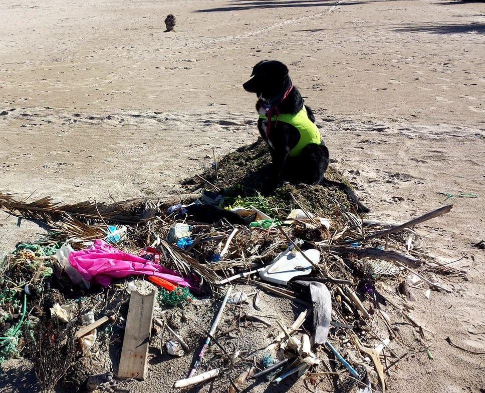 Giro del mondo in bici per  combattere  i rifiuti: è la missione di Starsky e Hutch, l ex vigile del fuoco e il suo cane