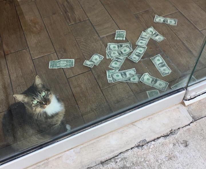 Ecco Sir Whines-A-Lot, il gatto che  ruba  ai ricchi per dare ai poveri