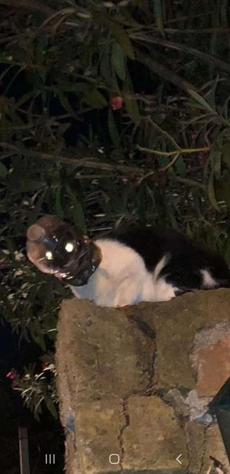 Dopo Verona anche a Roma gatto con la testa infilata nella bottiglia: mobilitazione per salvarlo