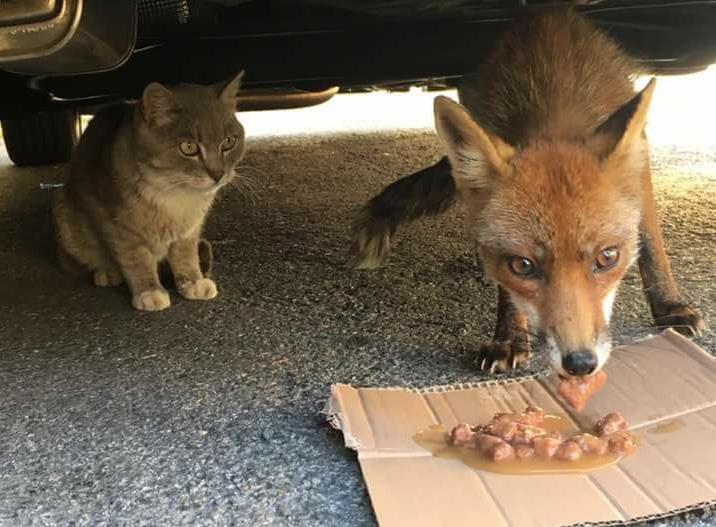 Il Gatto e la Volpe si aggirano nei dintorni di Firenze: ecco la prova
