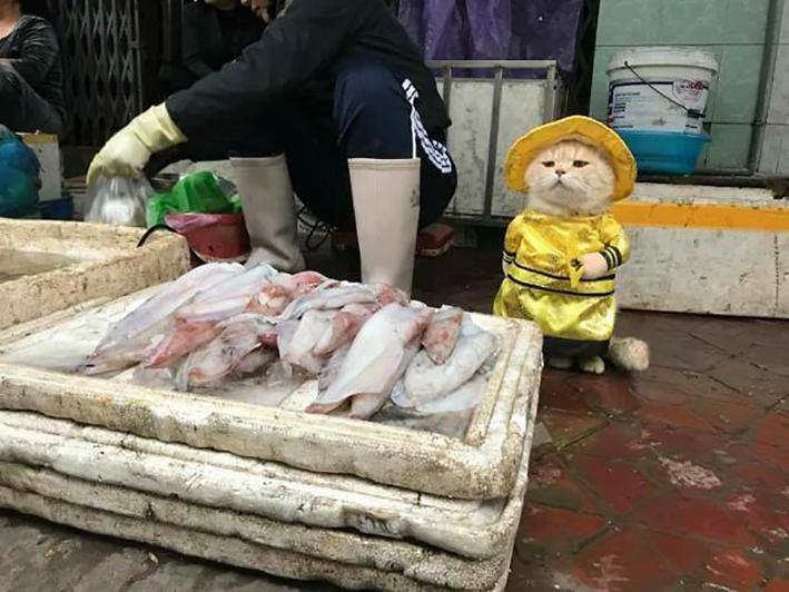Vietnam Il Gatto Che Vende Pesce Al Mercato Diventa Una Star Del