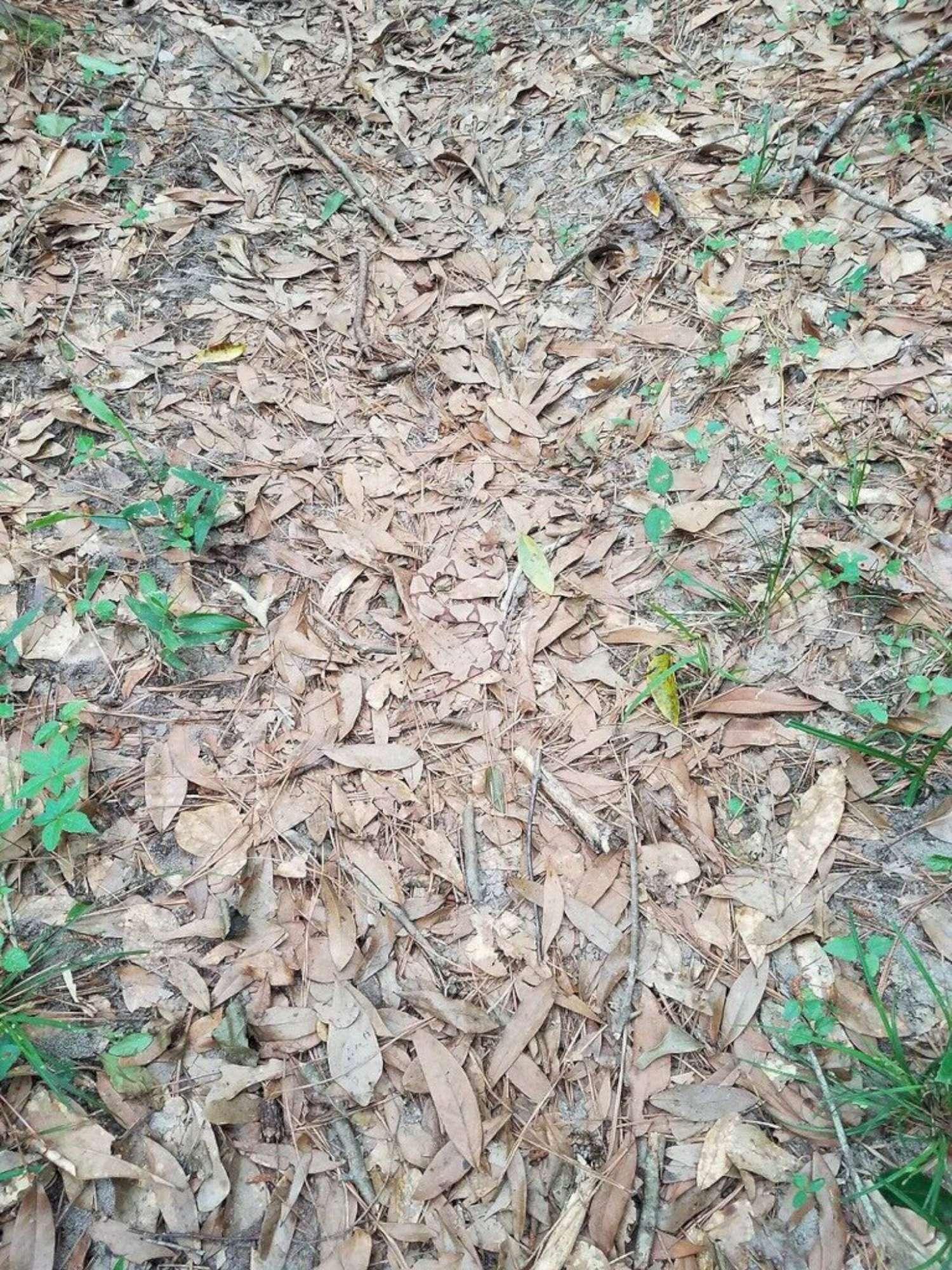 Sui social dilaga la caccia al serpente nascosto in una foto