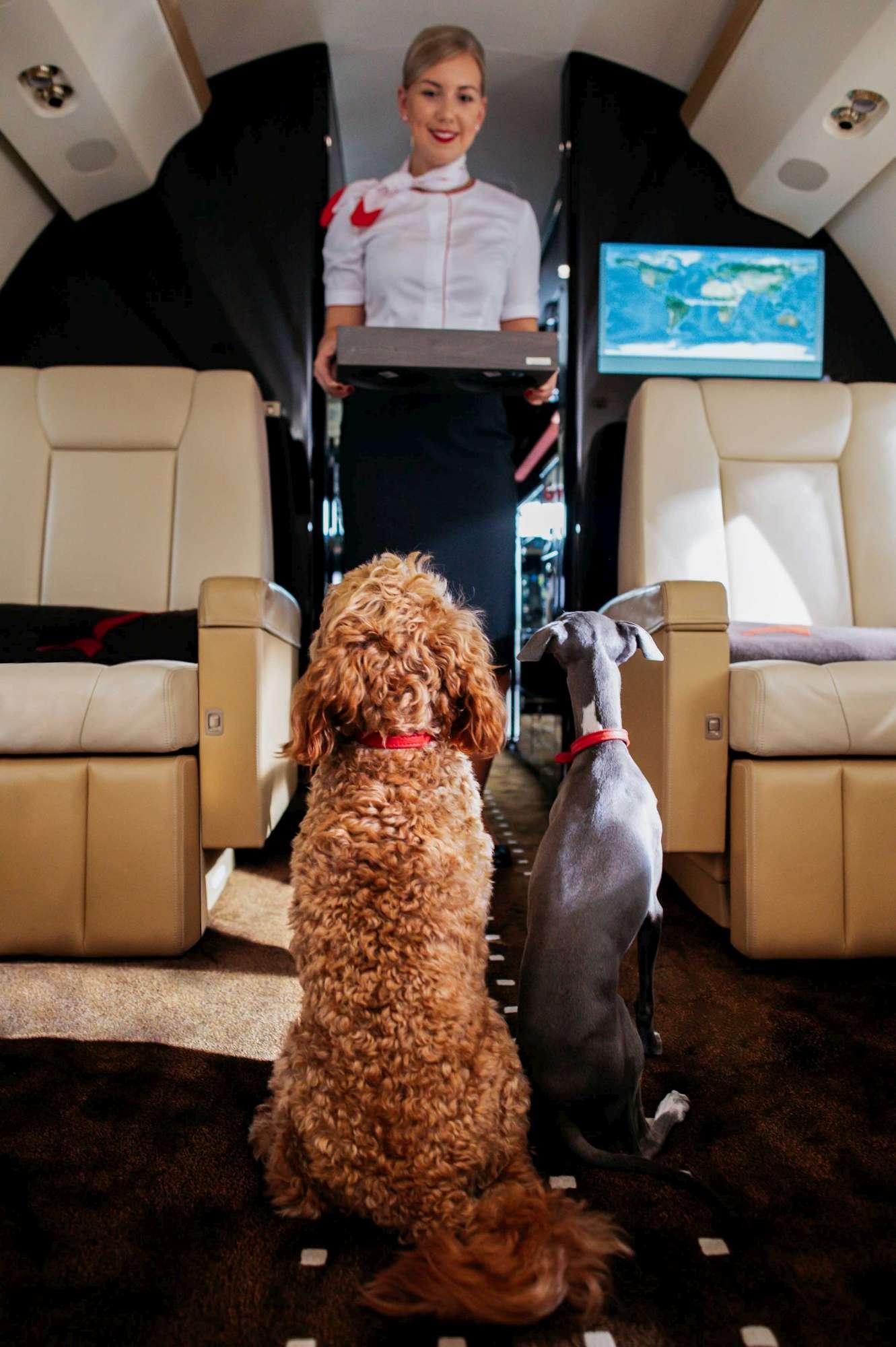 Cani e gatti in aereo, il servizio extra-lusso per gli amici a 4 zampe (coccole incluse)