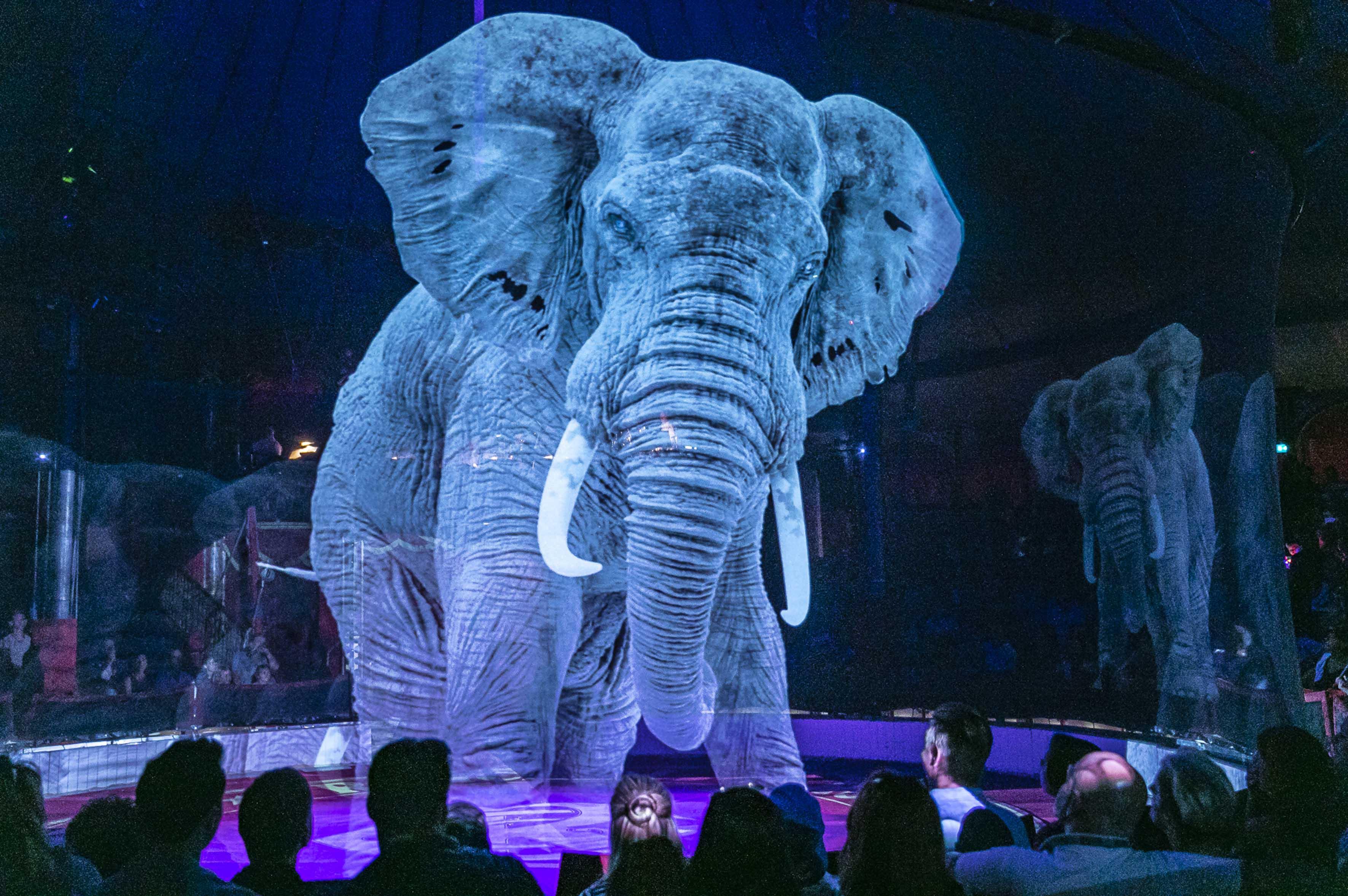 Addio agli animali nel circo, per la prima volta sostituiti da ologrammi 3D