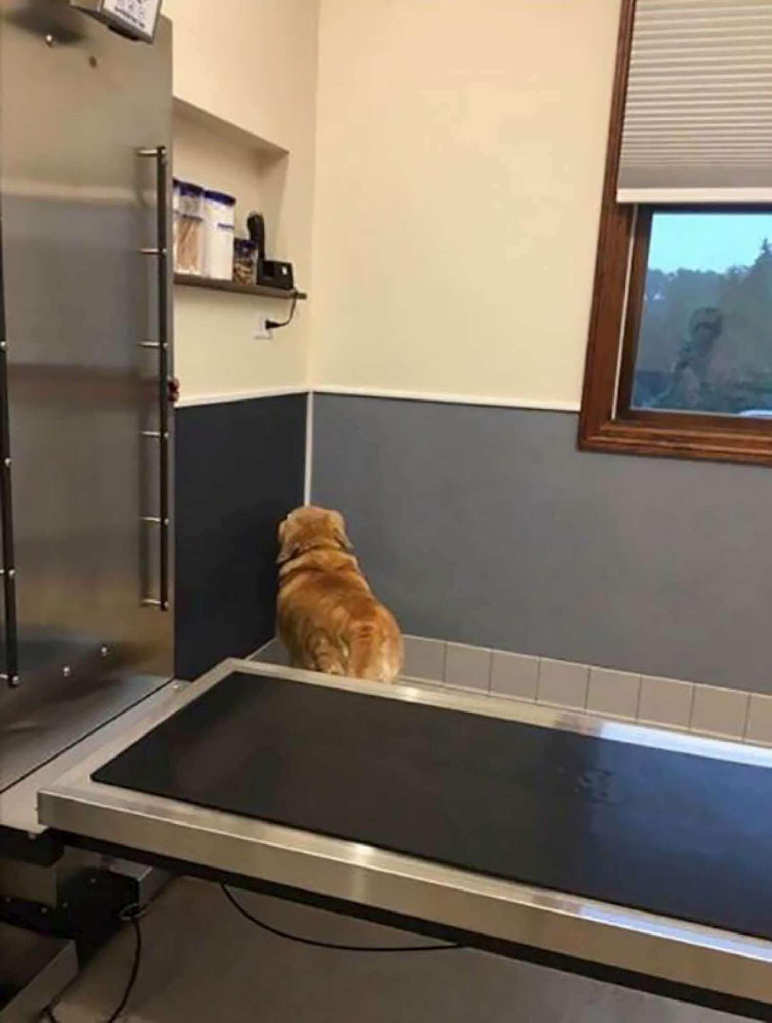 I cani scoprono di essere stati portati dal veterinario: la reazione è esilarante