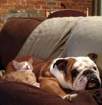 Cani e gatti amici per la nanna: i micetti si addormentano su morbidi guanciali di pelo