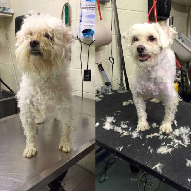 Coiffeur gratis per i cani più anziani per renderli più belli e farli adottare