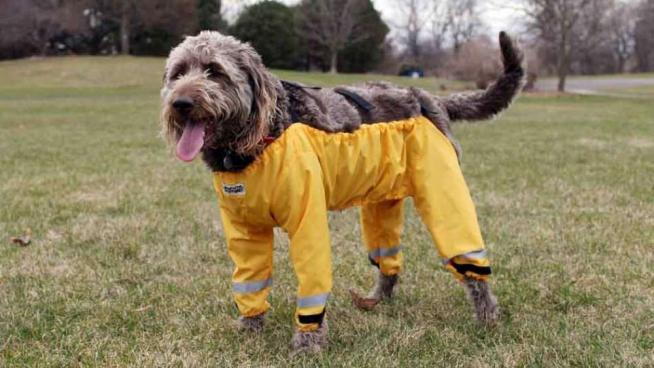 Caldi, comodi e soprattutto fosforescenti: pantaloni all ultimissima moda per i cani