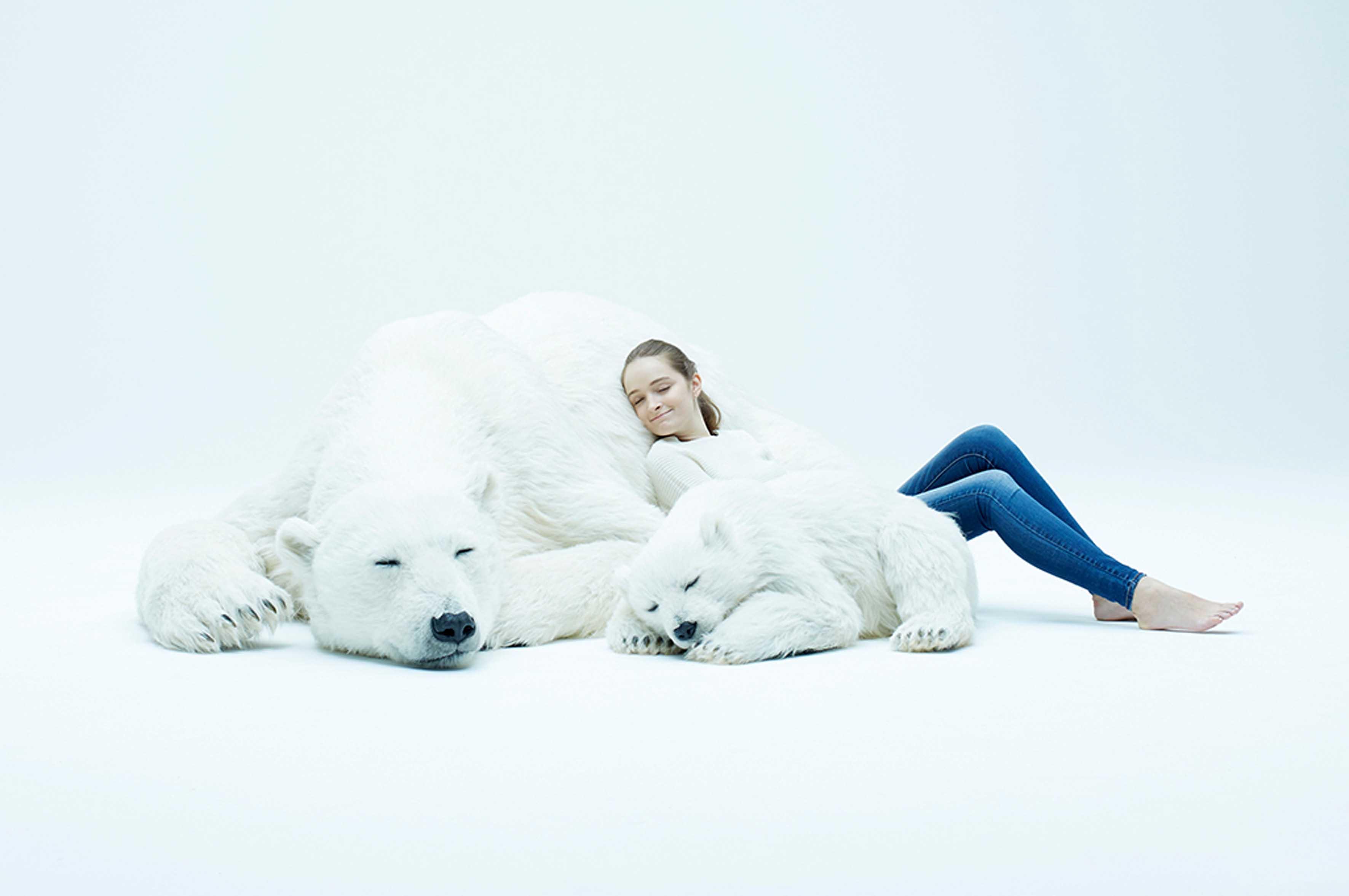 Sembrano veri ma sono finti: azienda crea copie di orsi polari per aiutare la fauna selvatica
