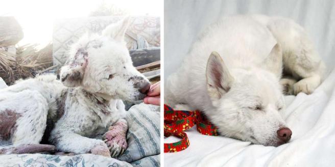 I cani prima e dopo l adozione: la felicità negli scatti virali
