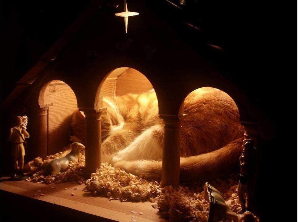Immagini Natalizie Con Presepe.Natale Con Il Gatto Nel Presepe Foto Tgcom24