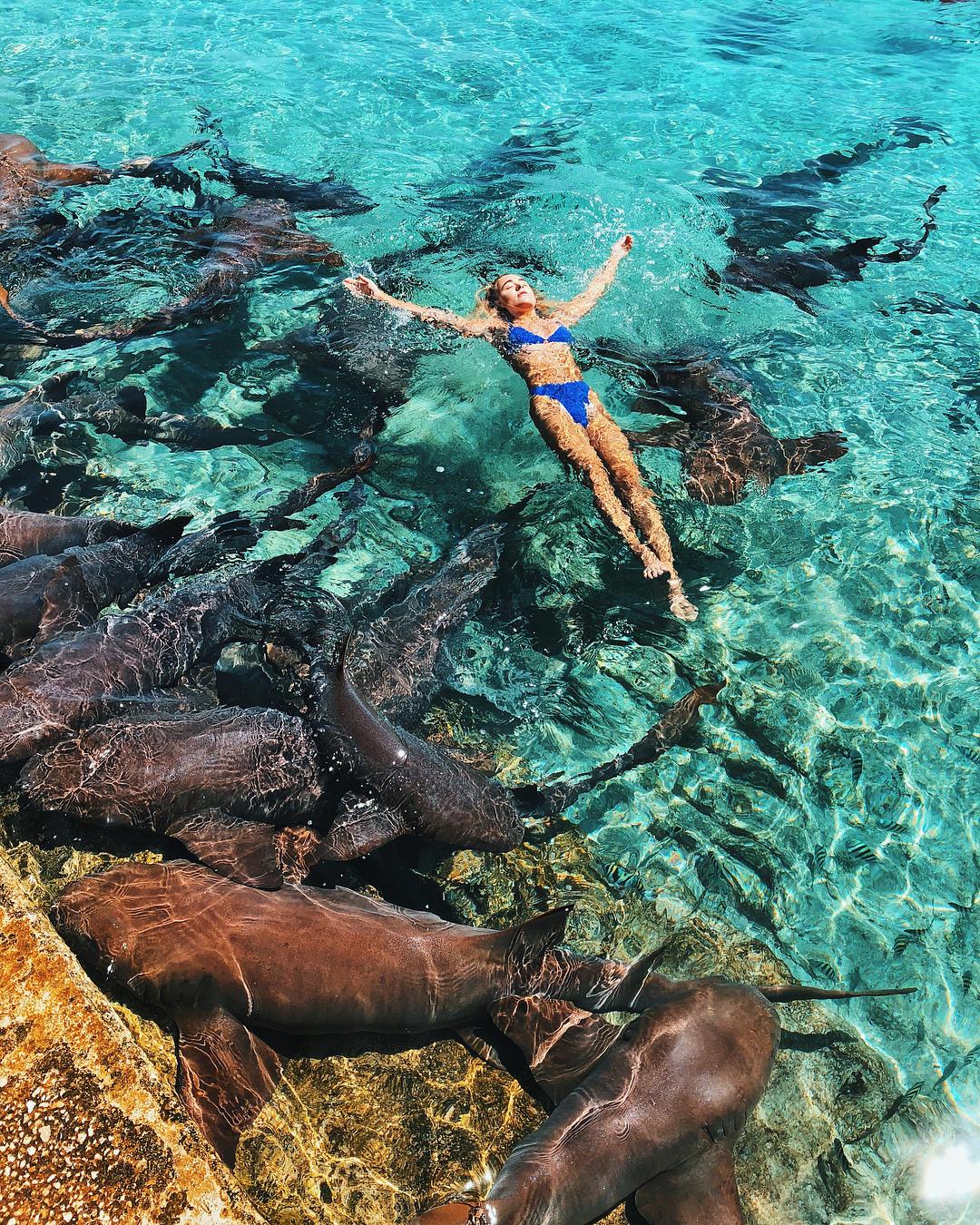 Bahamas, cerca lo scatto perfetto: morsa da uno squalo