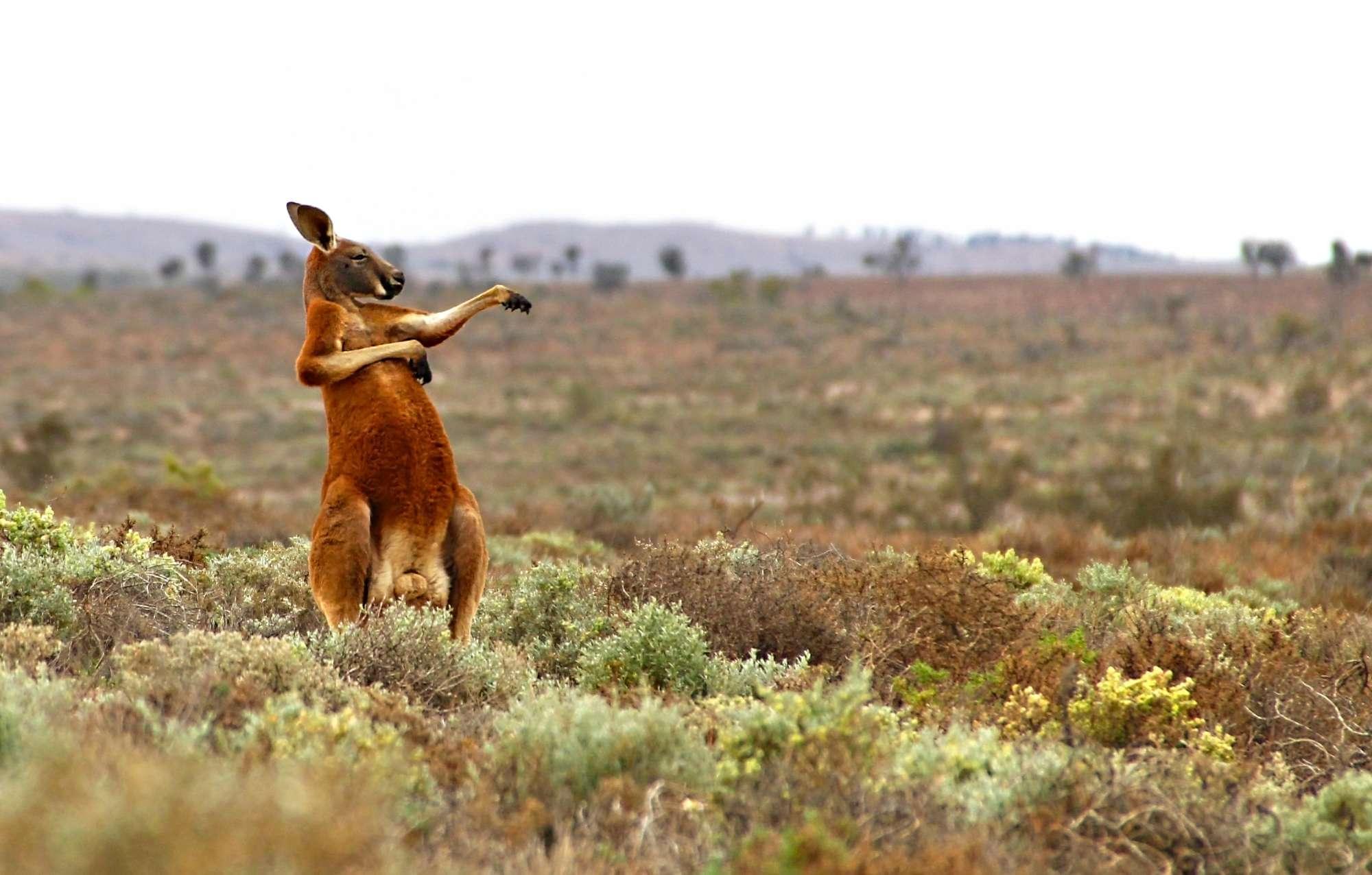 Immagini Dal Mondo Divertenti il lato buffo della natura: ecco le foto più divertenti dal