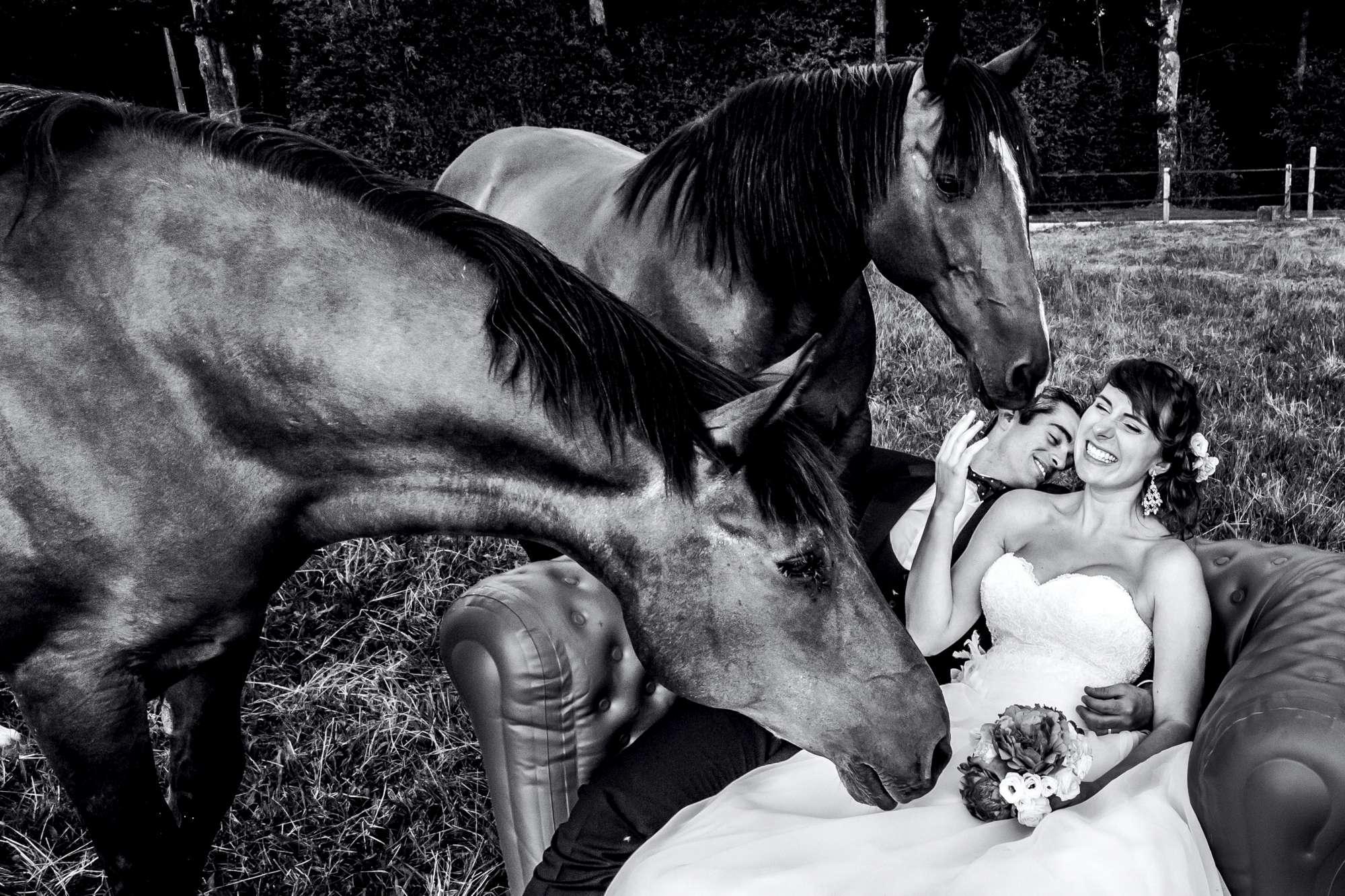 Matrimonio con testimoni... speciali: quando gli animali sono i veri protagonisti dell album di nozze