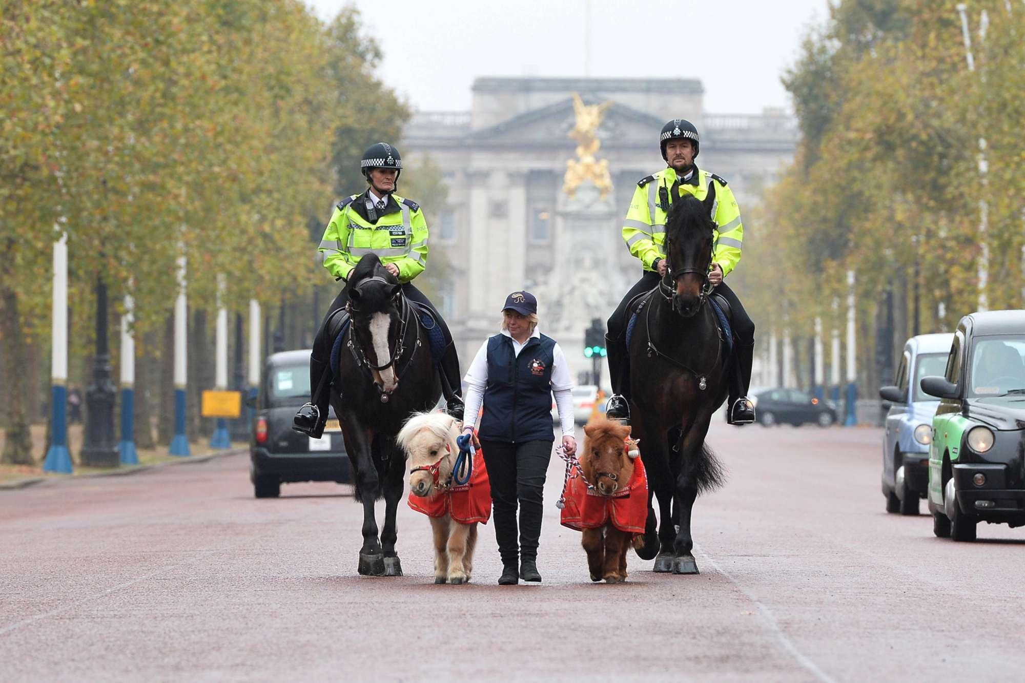 Ecco Teddy e Doris, i pony della polizia metropolitana di Londra