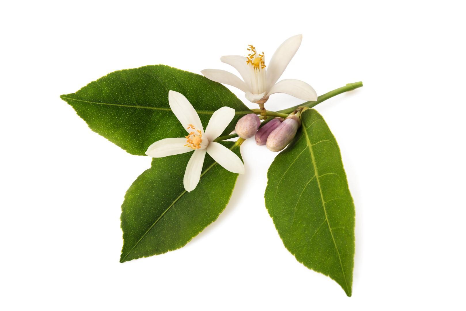Profumi da donna: vivaci, caldi, afrodisiaci. Le novità di primavera