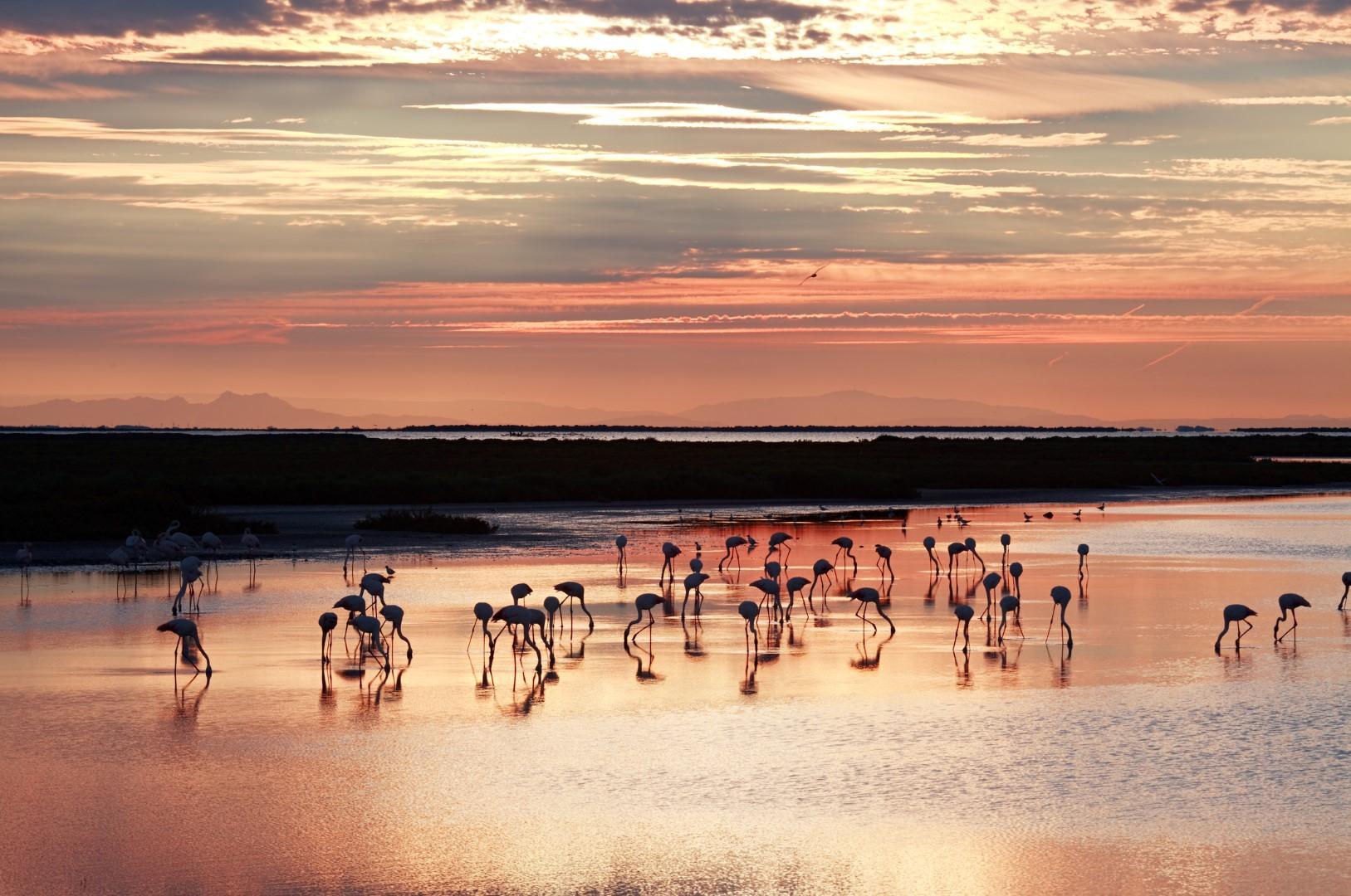 Francia: scoprire la Camargue in crociera fluviale