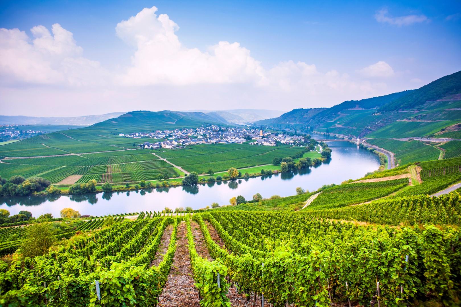 In viaggio nei luoghi di...vini