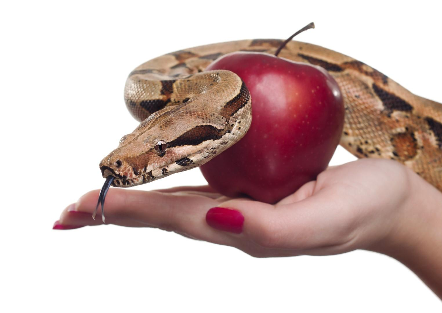 Oroscopo: le tentazioni Segno per Segno