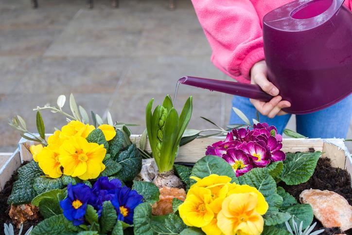Saluta la primavera: ecco i fiori da tenere sul balcone di casa
