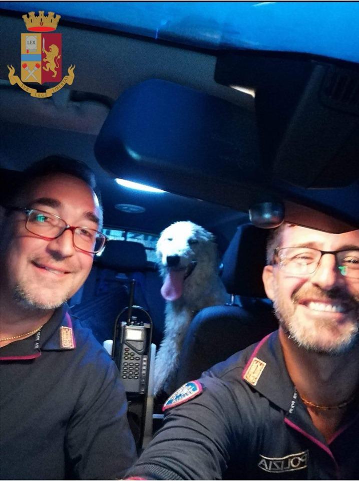 Salvato sul grande raccordo anulare dalla polizia, il cane Pelè torna a casa