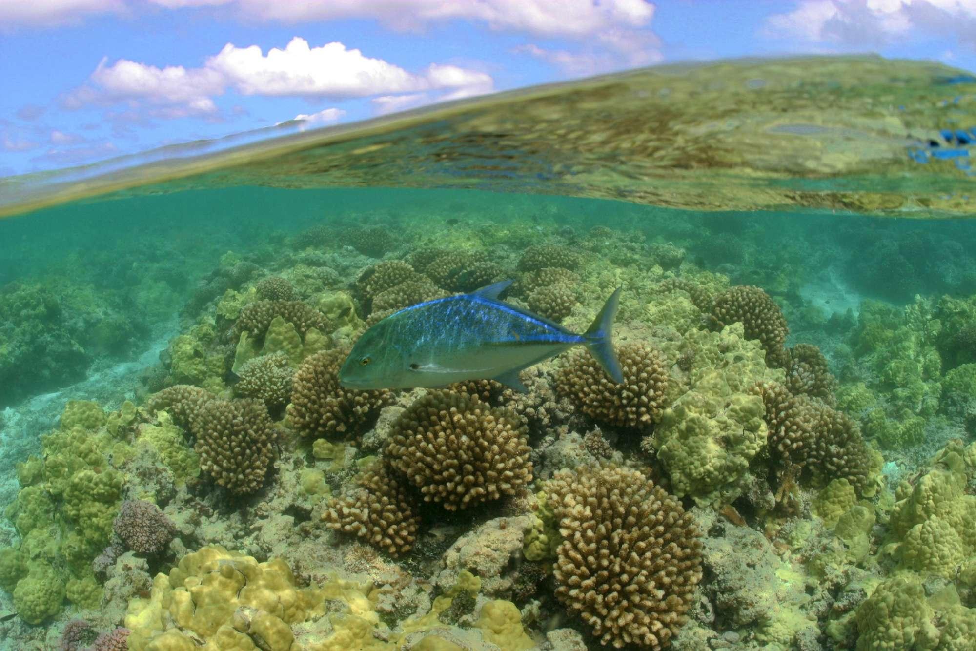 Alle Hawaii la riserva marina più grande del mondo