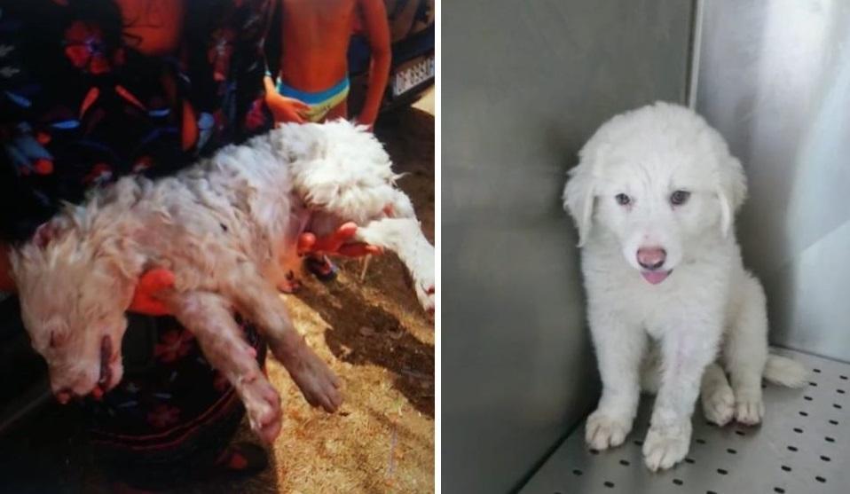Latina, cucciolo lasciato in auto sotto il sole mentre la sua famiglia è in spiaggia: salvato in extremis e adottato
