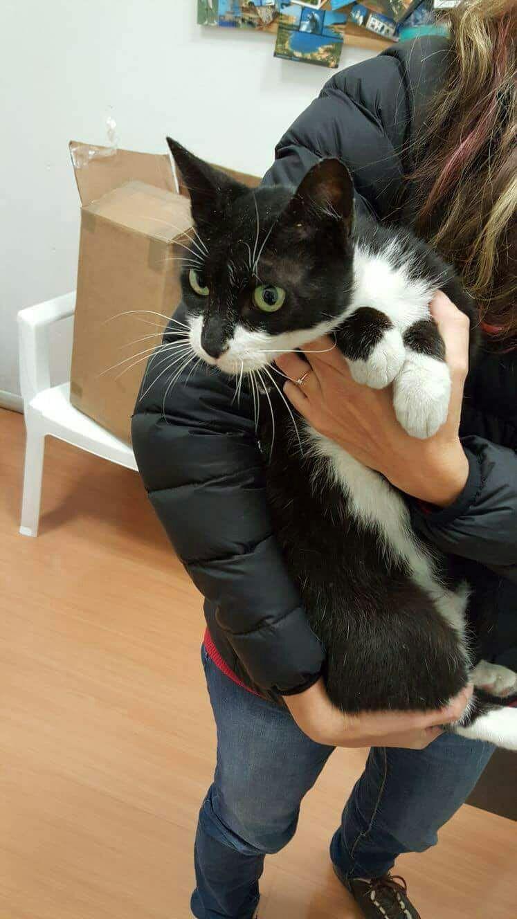 Lecce, gatto chiuso per sbaglio in un pacco finisce a Vicenza: dopo ben 4 giorni di  prigionia  è salvo