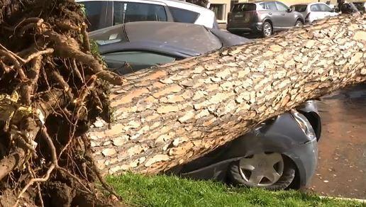 Tragedia sfiorata a Roma: cade un albero davanti al liceo Giulio Cesare, auto schiacciate