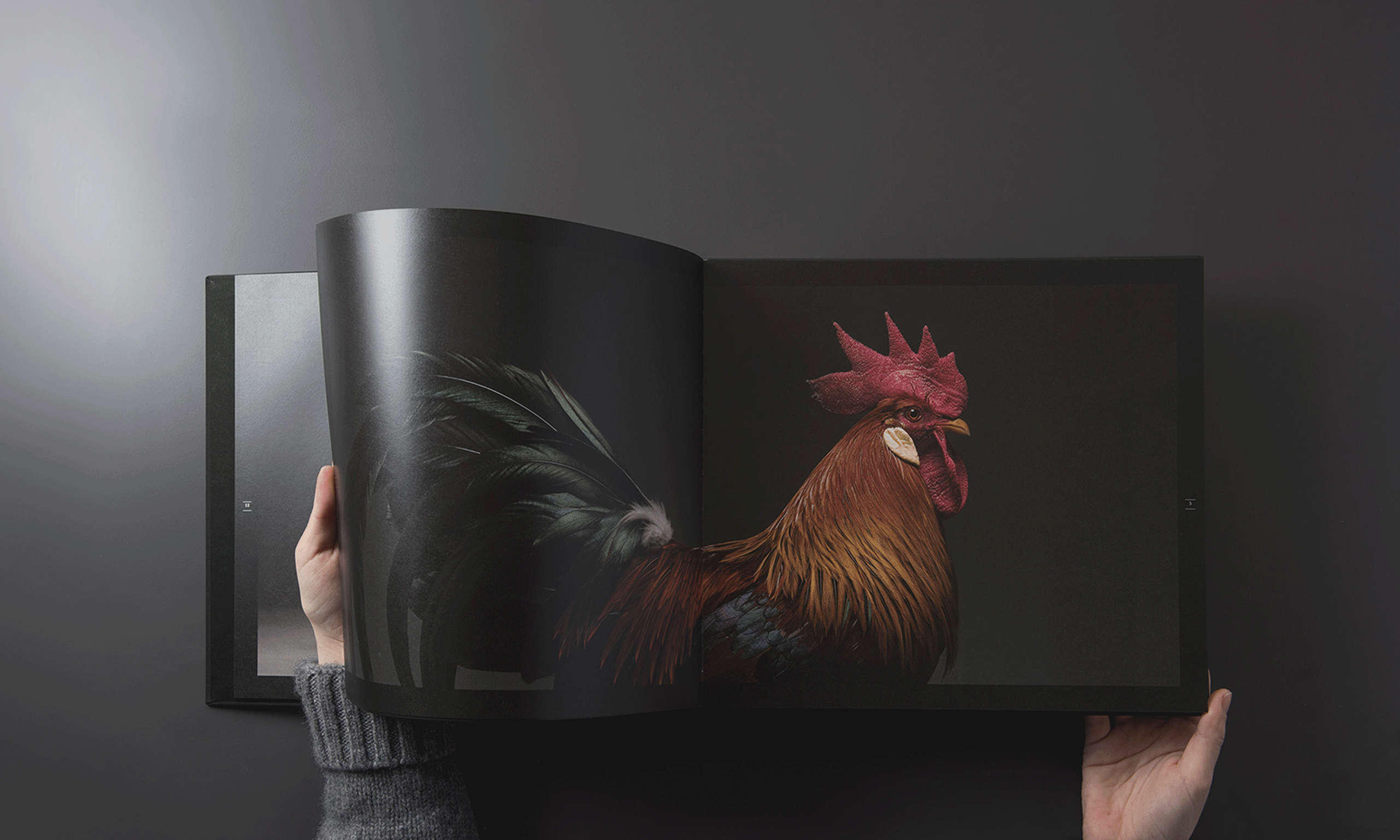 ZOOlander, a Milano anche le galline fanno le top model