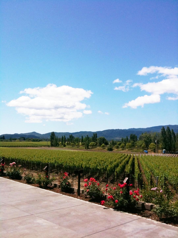 Andar per vini: gli itinerari migliori del mondo
