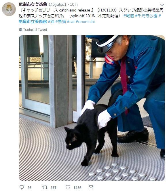 Hiroshima, guardia e... gatti: chi sono il rosso e il nero che da due anni tentano di entrare al museo