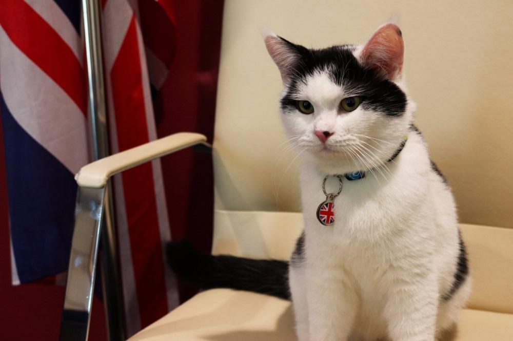 Dal gattile di Amman all ambasciata britannica in Giordania: si chiama Lawrence il  diplogatto
