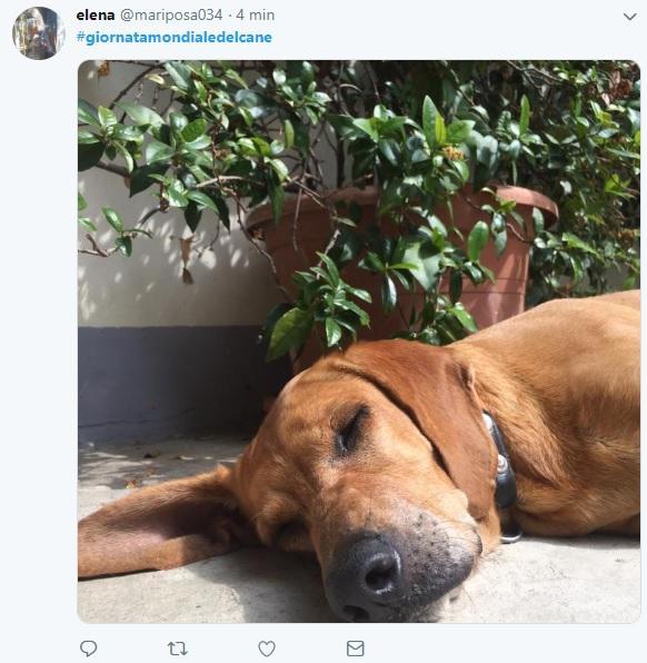 E  la giornata mondiale del cane: i social invasi di foto e messaggi
