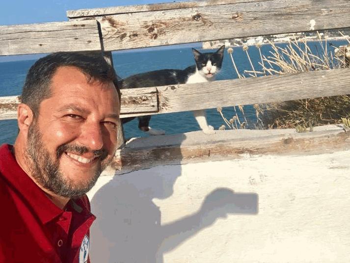 Anche i gatti contro Salvini: la foto del ministro diverte il web