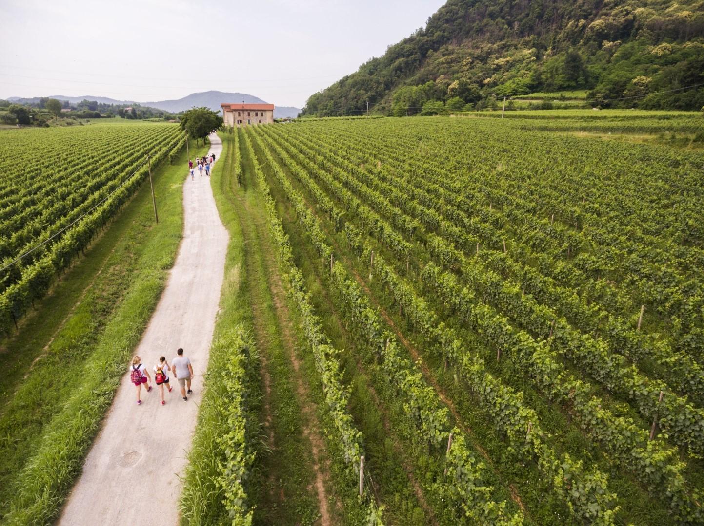 Lombardia: un estate nei vigneti della Franciacorta