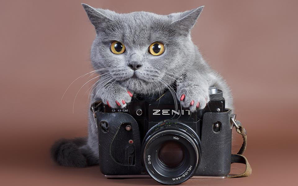 SperCat Show: i gatti più belli e simpatici