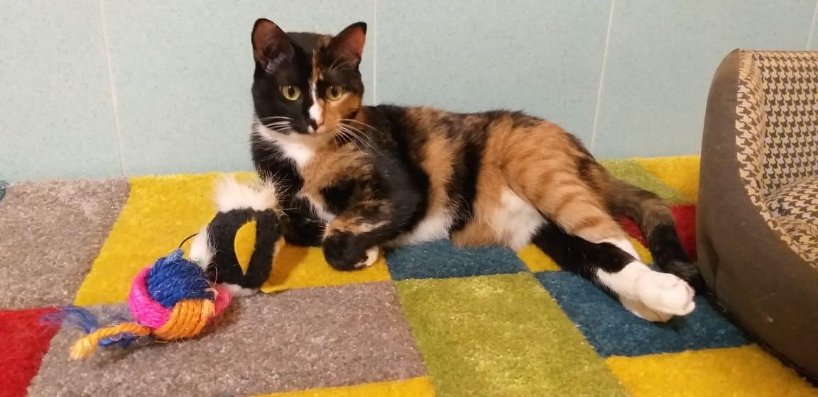 La disabilità ci fa... un baffo : la seconda vita di Miracle e Sally, gattine investite