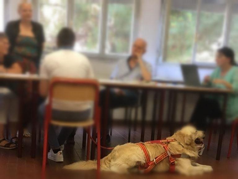 Alla Maturità con il cane di salvataggio: studentessa per la prima volta affronta una prova orale e prende il massimo dei voti
