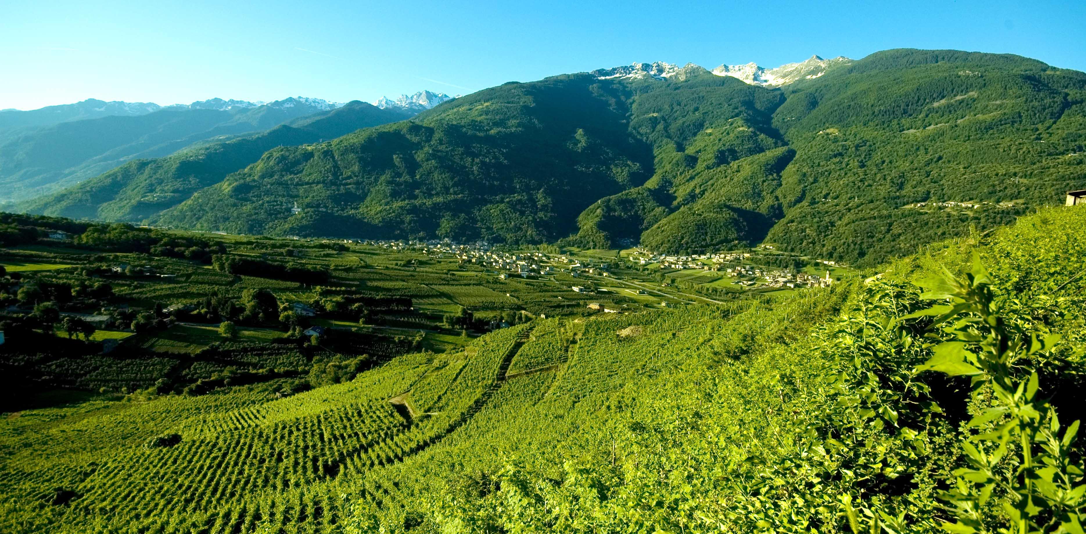 Scoprire la Valtellina passeggiando tra i vigneti