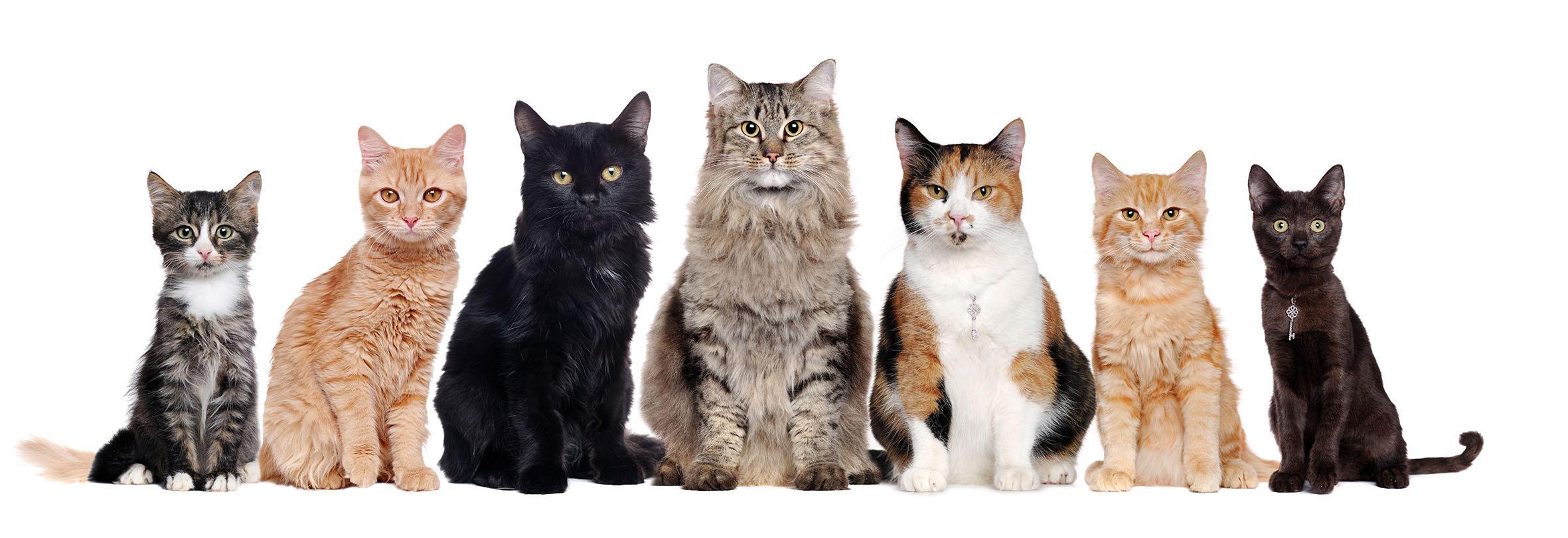 Città dei gatti: la rassegna che fa  miao