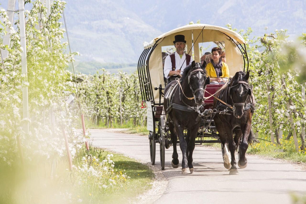Alto Adige: in carrozza per gli asparagi