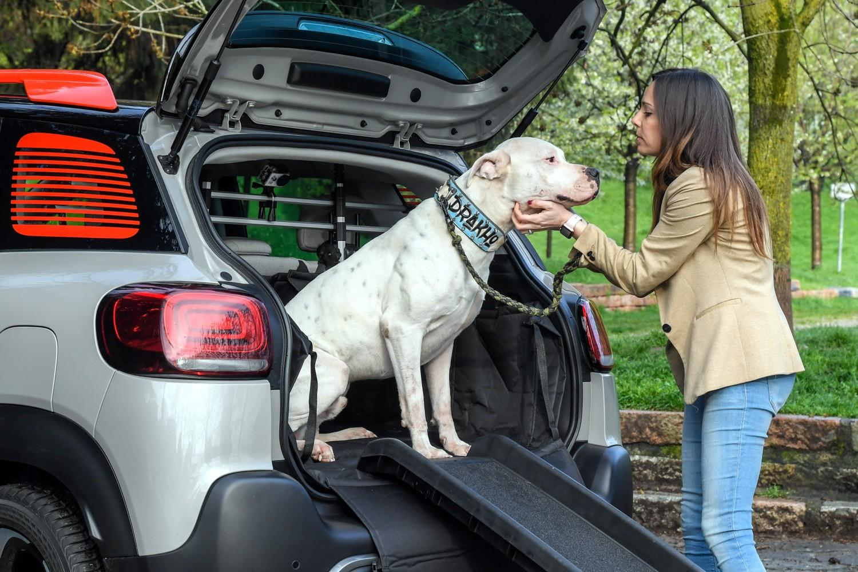 Auto e cani, la vacanza è insieme