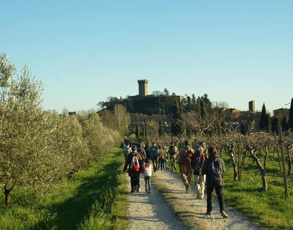 Passeggiare tra gli ulivi, dal Trentino alla Sicilia