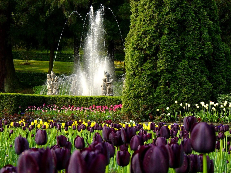 Sbocciano i tulipani sul Lago Maggiore