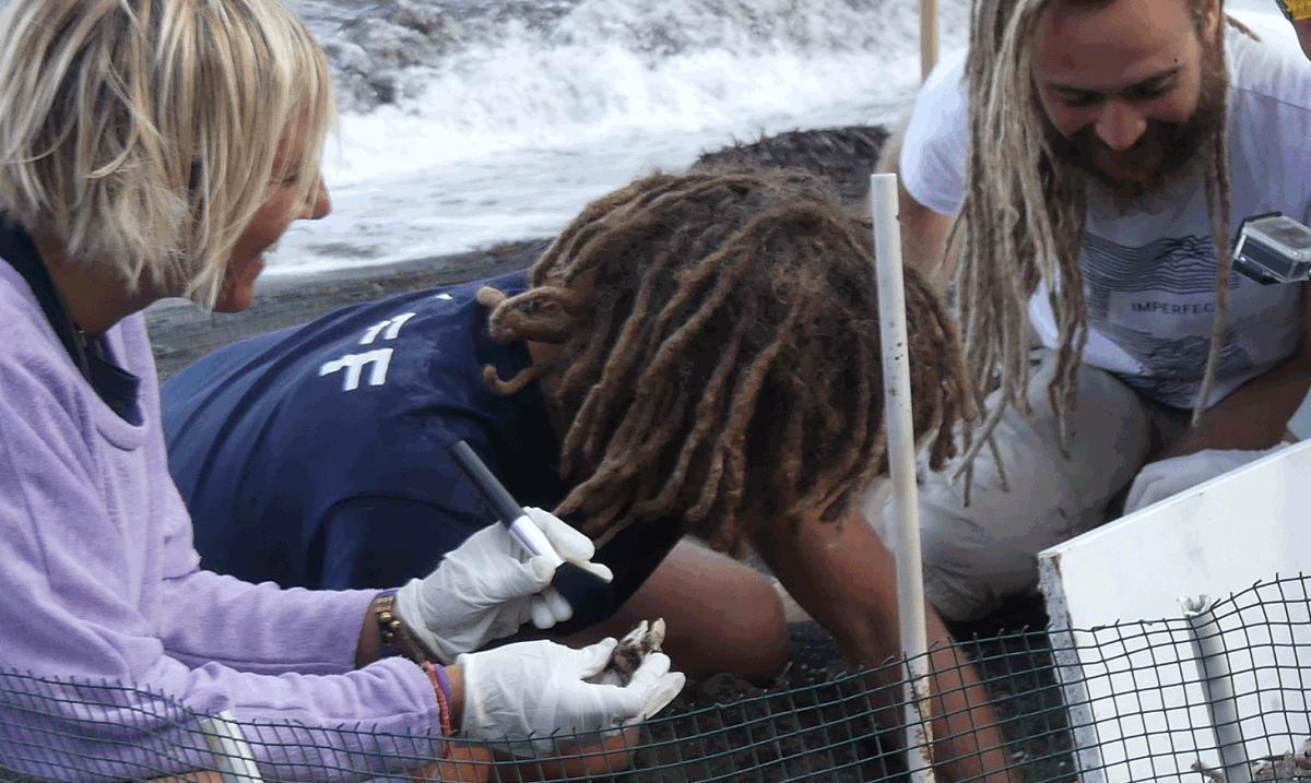 Linosa, chiuso il centro di recupero: tartarughe marine in pericolo