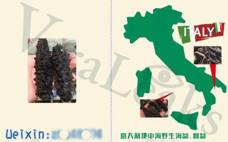 Traffico illegale di cavallucci marini e oloturie da Taranto alla Cina: ecco le chat nel Dark Web