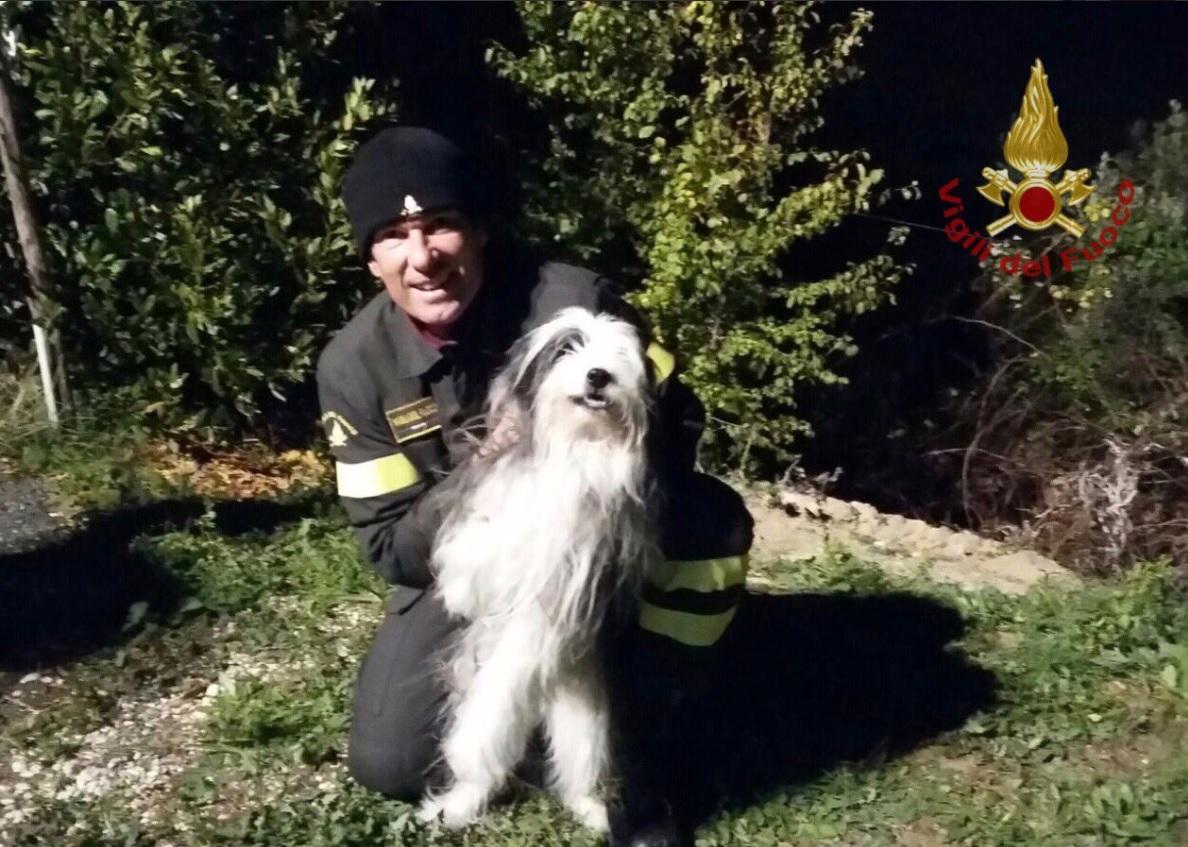 Ancona, vecchio e cieco finisce in un fosso: cane salvato dai vigili del fuoco